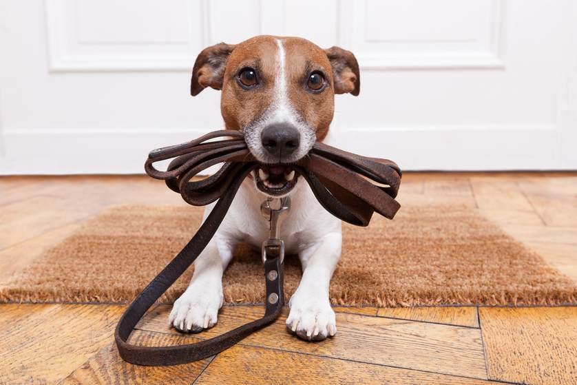 Image result for dog walk