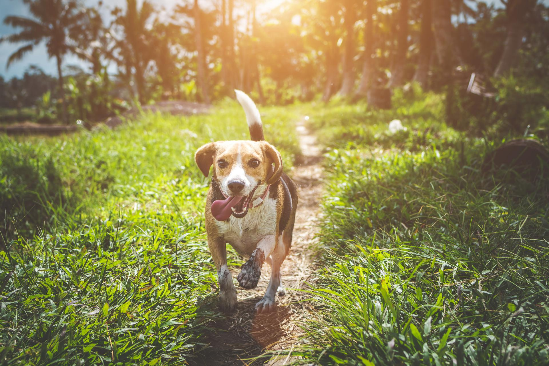 hot weather pet safety